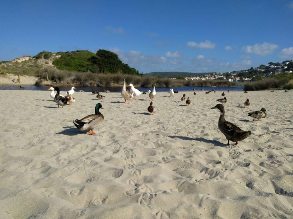 Bird Watching in Menorca
