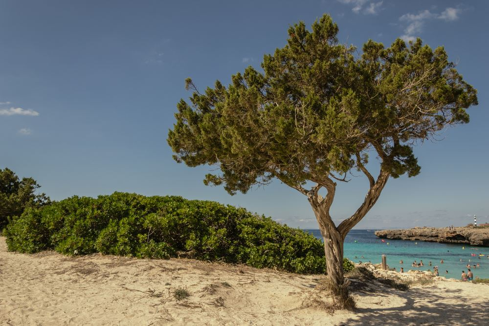 Cala en Bosch in Menorca