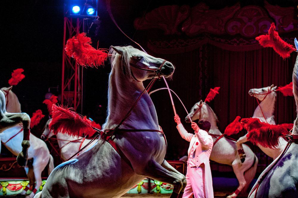 Horse show in Menorca